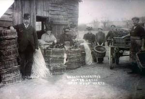 Richard Bradbery, grandson to William Bradbery, on the Watercress Farm at West Hyde, Courtesy of Wikipedia
