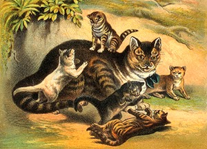 cats in the 1700s