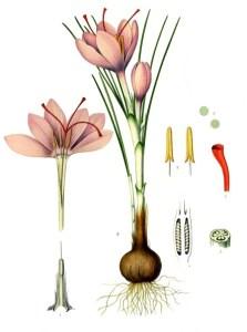 Saffron for medical drinks