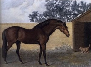 Godolphin Arabian and His Friend the Cat by George Stubbs, Courtesy of Wikipedia