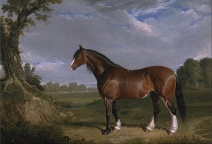 Clydesdale Stallion Painted in 1820, Courtesy of Wikipedia