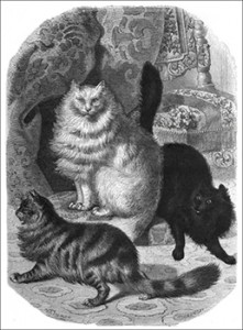 Angora Cats, Authors Collection