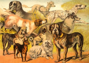 Left to Right and Top to Bottom: Retriever, Chinese Dog, Coach Dog, Setter, Shepherd, Bull Dog, Pug, Mastiff, Terrier, and Skye Terrier, Author's Collection