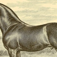 Jobs for Horses: What Work They Did in the 1800s