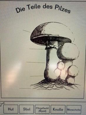 Teil des Pilzes