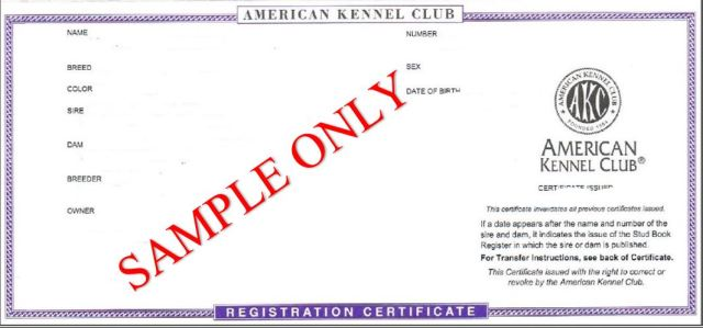 AKC registered puppies are a scam. AKC kennel club is a scam.