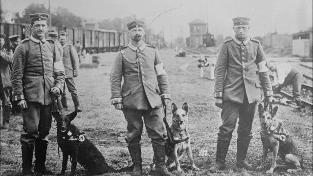 German Shepherds in World War 1