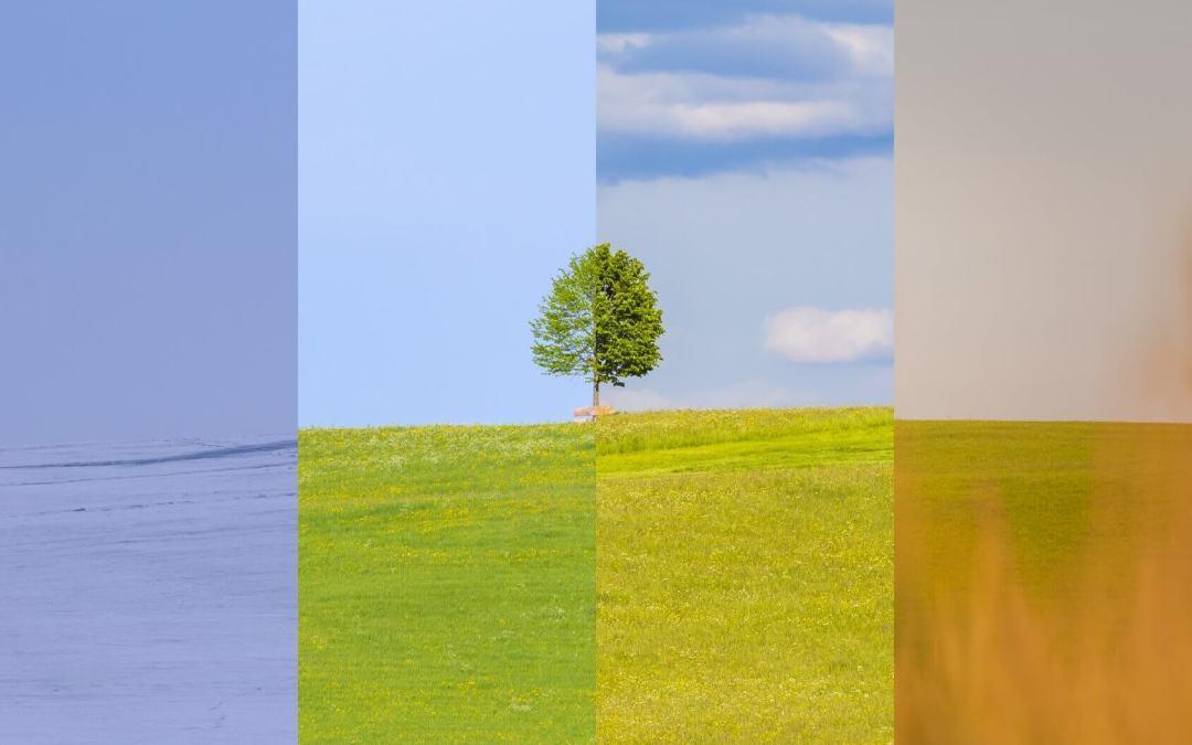 Evergreen Content: So füllen Sie Ihre Social Timelines