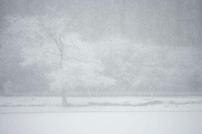 Snow nearly hides a tree from sight in Memorial Park. (C-T photo Max Gersh)