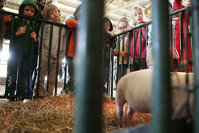 First-grade students from Blue River Valley Elementary School look at a pig display early Friday afternoon on the Trennepohl Farms in Middletown. (C-T photo Max Gersh)