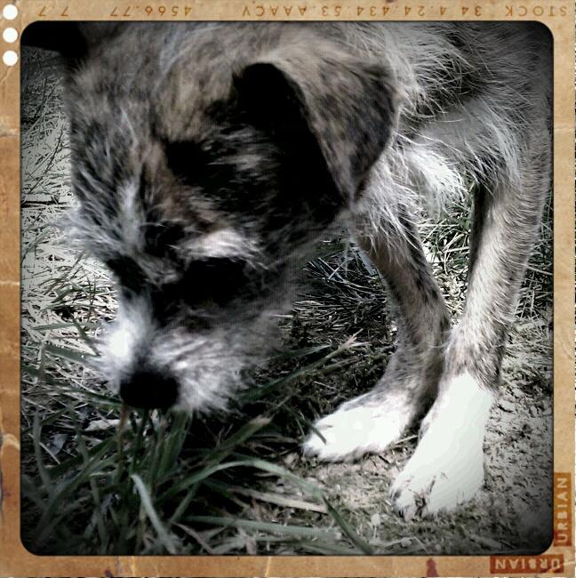 My parent's dog, Elsie. ©2010