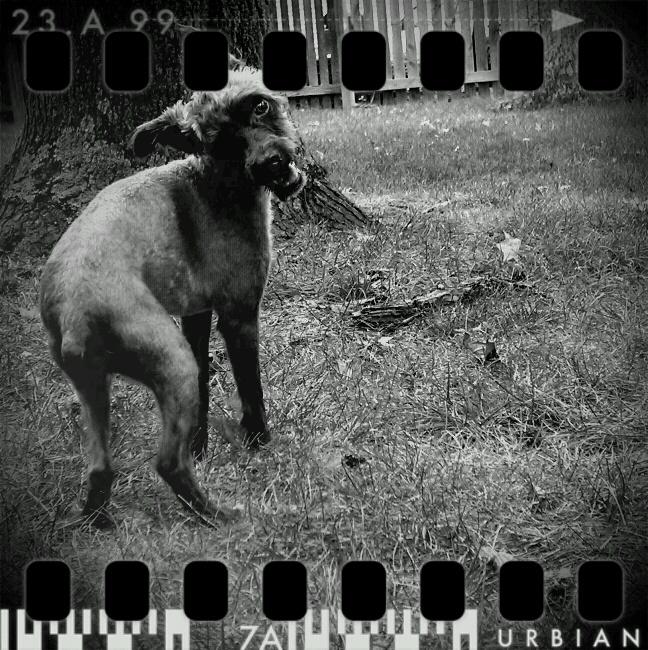 My parent's dog, Oliver. ©2010