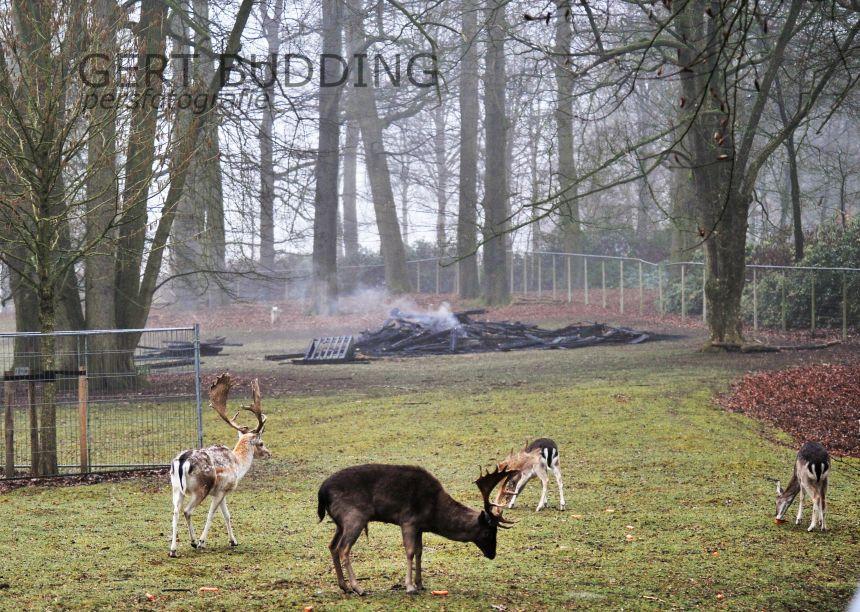 Voerderhok hertenkamp ONO Renkum Wageningen in as gelegd