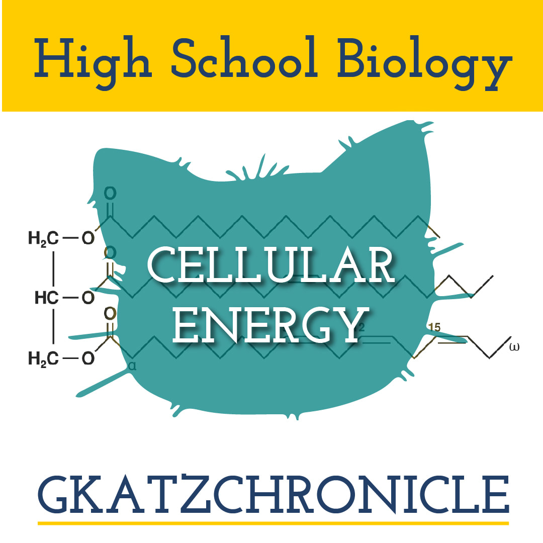 Cellular Respiration 4 Youtube Videos Video Worksheet