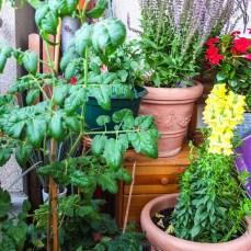 Pflanzenecke auf dem Balkon