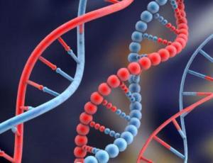 La música: ¿invento cultural o está en los genes?, Terapia Gestalt Valencia - Clotilde Sarrió