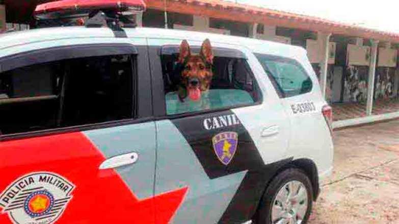 Cão de guarda na Polícia Militar