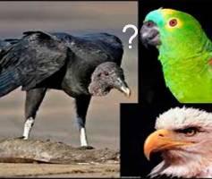 Qual tipo de profissional você é? Papagaio? Urubu? Águia?