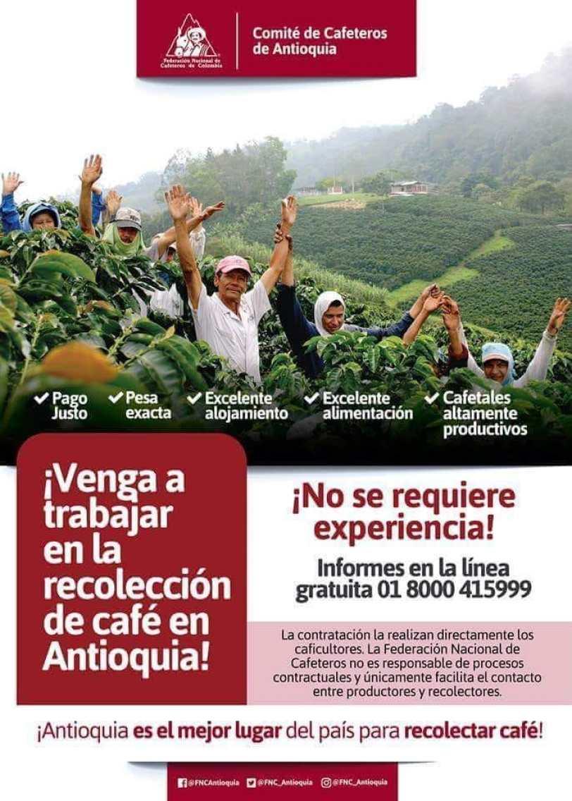 empleo-trabajo-convocatoria-para-recoletores-de-cafe-en-colombia-comite-nacional-de-cafeteros