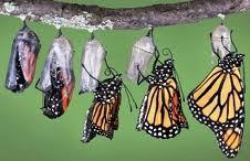 liderazgo transformador 1