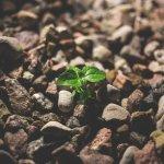 Éxitos grandes a través de pequeñas innovaciones