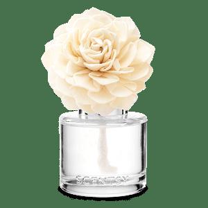Amazon Rain Fragrance Flower