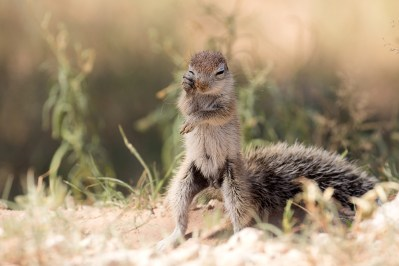 We had stopped next to a dusty road in the Kgalagadi Transfrontier Park when we spotted this cute baby squirrel. I couldn't resist taking a few images. - By Cisca van Niekerk, Centurion. Canon 7D Mark II, Canon 100-400mm f/4.5 - 5.6 L II, ISO 400, f/5.6, 1/1250 sec.