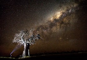 We live in a beautiful world! Here, a magnificent baobab tree is lit by a beam of torchlight cascading on into the Milky Way. This photo was captured in the Mashatu Game Reserve, Botswana. - Basson van Zyl, Langebaan Canon 6D, Canon 70-200mm f/4,ISO 100, f/4, 1/2000 sec