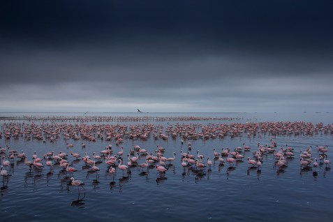 I sat by the lagoon in Walvis Bay, Namibia, early one morning watching the flamingos move back and forth as though they were in a dance. It was so peaceful. They have always been one of my favourite birds, and (except for the smell) it was the most fantastic and calming experience to see so many of them together. – By Jeanne Abrahams, Pretoria Canon 60D, Canon 18-200mm f/3.5-5.6, ISO 100, f/10, 1/320 sec