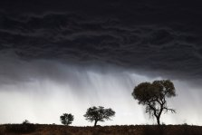 We were at the Craig Lochart waterhole in the Kalahari watching a pride of 13 lions on one side and this storm on the other. It kept building and eventually the lions were forced to huddle away in scrum formation. I liked these three trees with the incredible sky almost bellowing behind them. When the storm finally hit us, it rained so hard that within 20 minutes the riverbed had flooded. – By Jeremy Browne, Hermanus Canon 6D, Canon EF 24-105mm f/4, ISO 2000, f/8, 1/350 sec