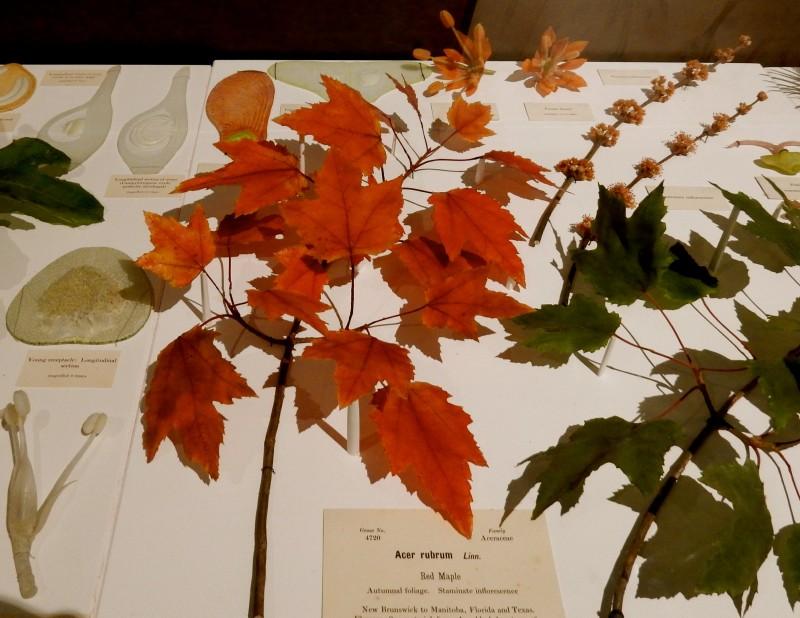 Glass plants, Harvard Museum of Natural History, Cambridge MA #Cambridge365 @GetawayMavens
