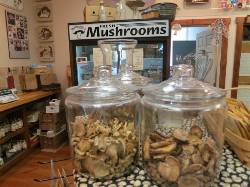 Mushrooms in all forms can be found in The Mushroom Capital of the World. Kennett Square, PA
