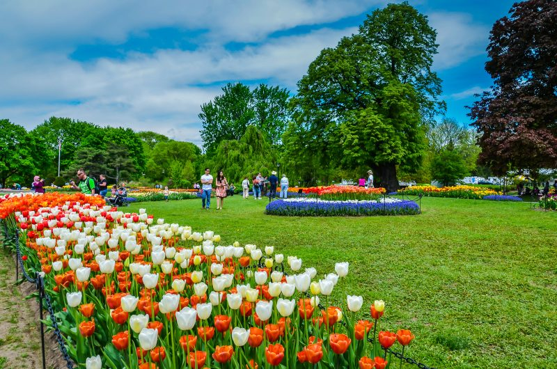 Tulip Fest #Albany #NY annual festival is a colorful celebration of Dutch heritage and imaginative communal space. #garden @GetawayMavens