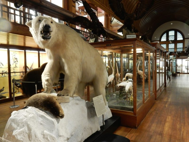 Fairbanks Museum of Natural History, St. Johnsbury VT