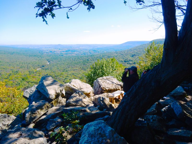 hawk-watching-hawk-mountain-sanctuary-pa