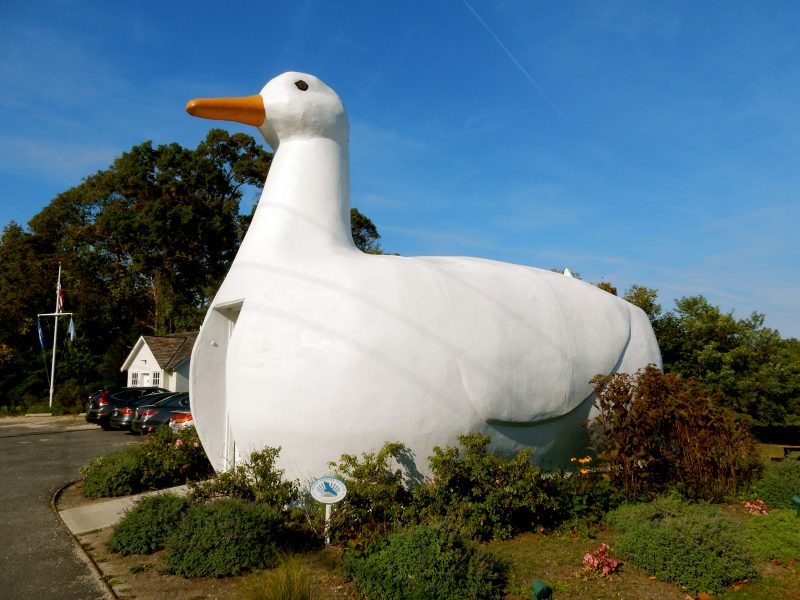 the-big-duck-flanders-ny