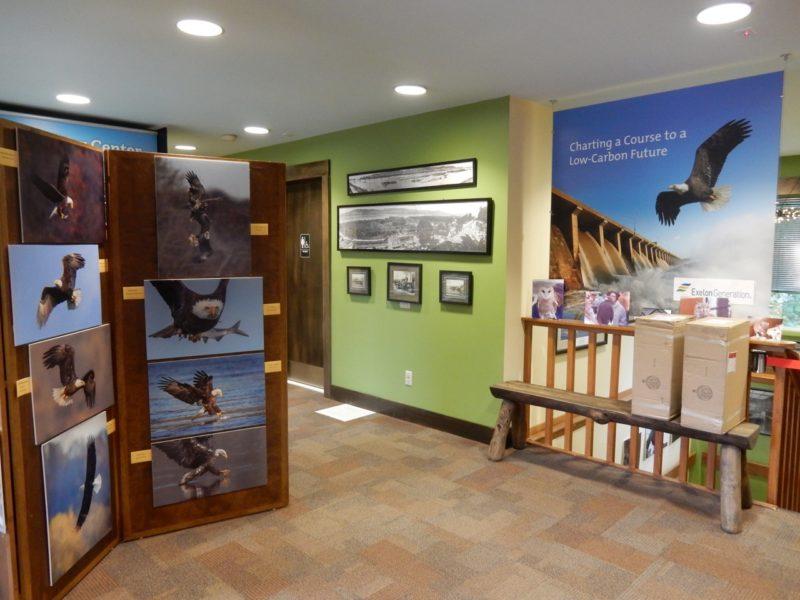 Eagle Photos, Conowingo Dam Visitors Center MD