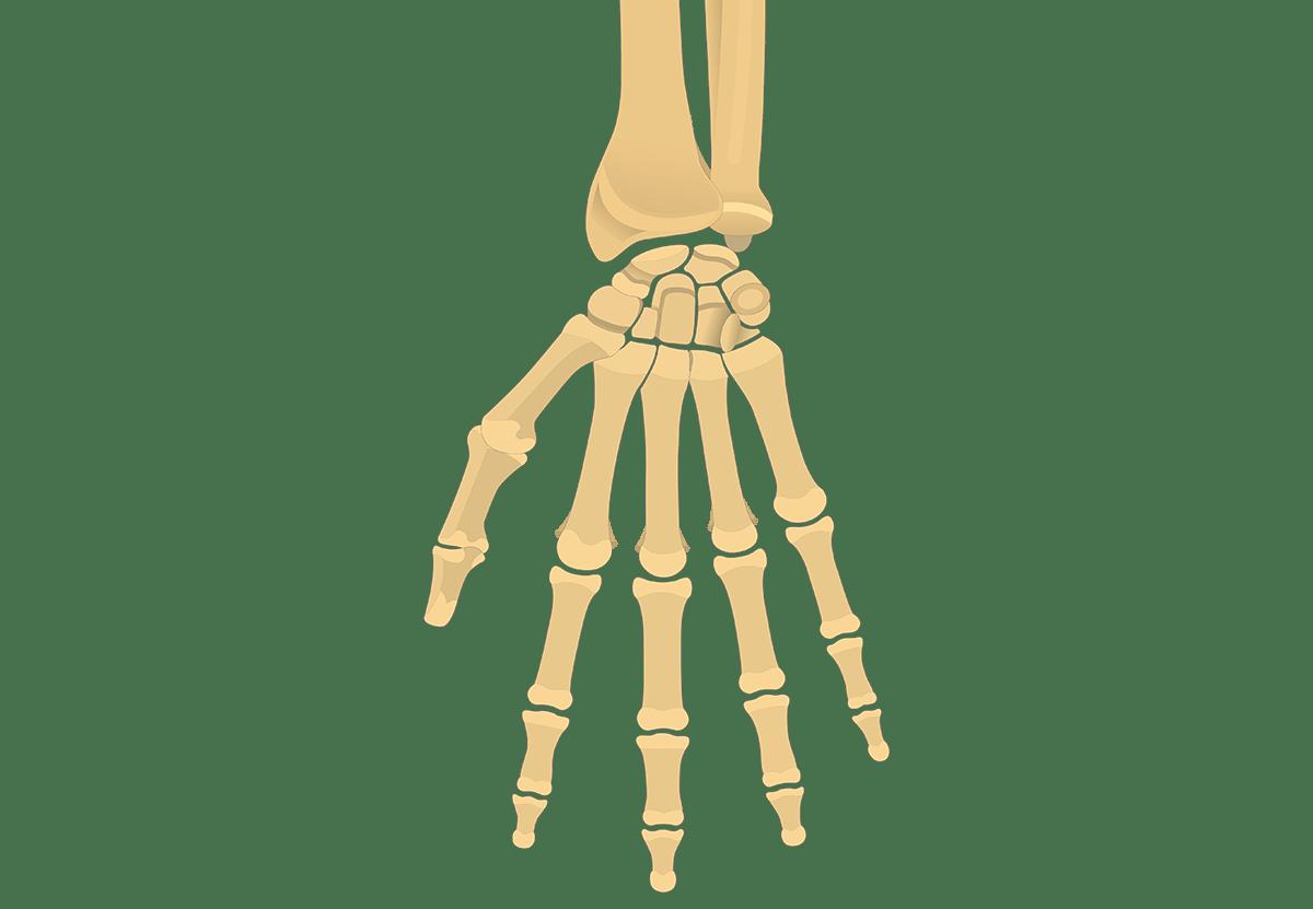 Bone Diagram Quiz