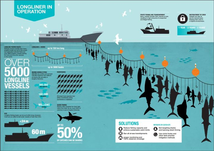 Longlines are not a sustainable fishing method and result in large amounts of bycatch