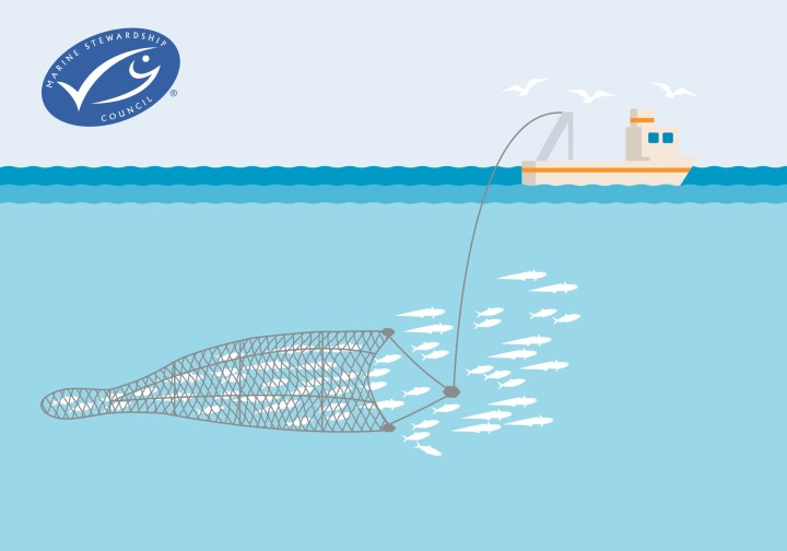 Midwater trawling and it's impact on marine life and their ecosystem. Pelagic trawling is not a sustainable fishing method.