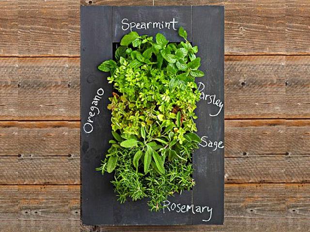 10 best indoor gardening gadgets getdatgadget - Indoor living wall planter ...