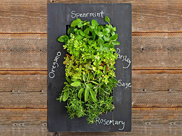Superbe Buy From Amazon · GroVert Living Wall Planter