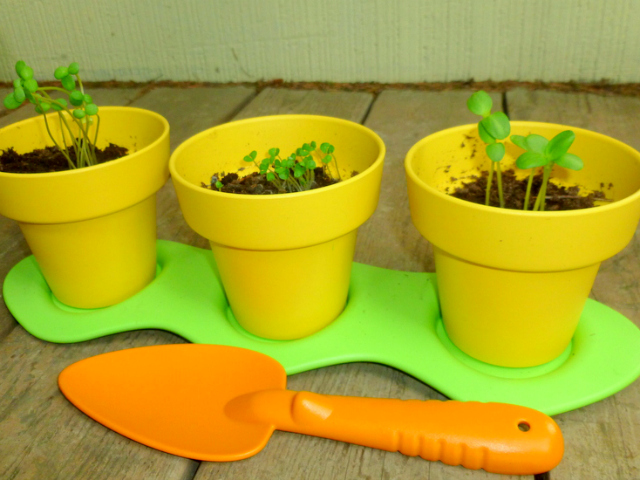 Green Toys Indoor Gardening Kit for Budding Gardeners