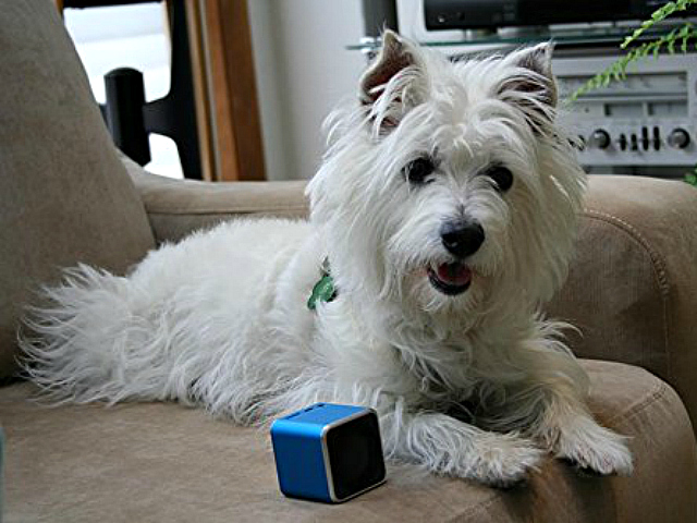Pet Tunes Uses Music To Soothe The Savage Beast