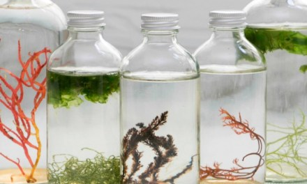 Cultured Algae Living Art Collection