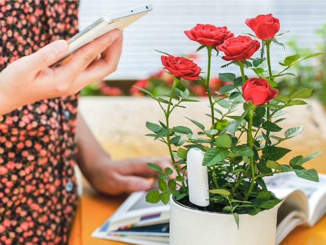 Xiaomi Flower Monitor Keeps your Houseplants Happy