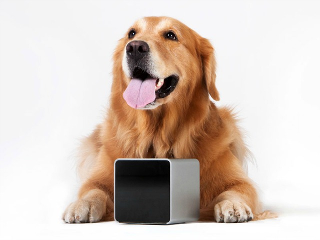 Petcube Keeps your Pets Happy while you are Away