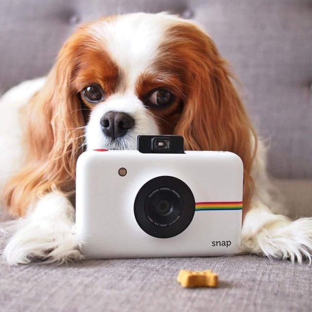 Perfect for Older Children: Polaroid Snap
