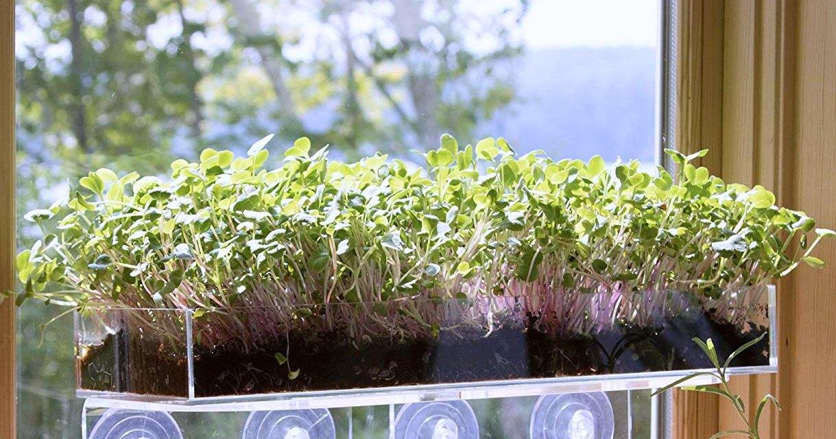 Window Garden Microgreens – Ultimate Vertical Kitchen Garden