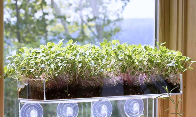 Window Garden Microgreens – Ultimate Vertical Kitchen Garden